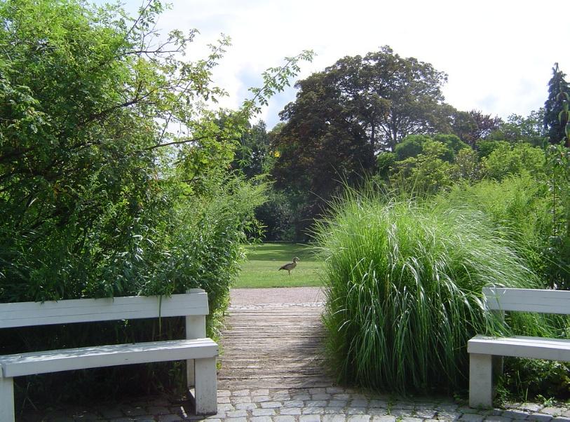Прогулки по городскому саду