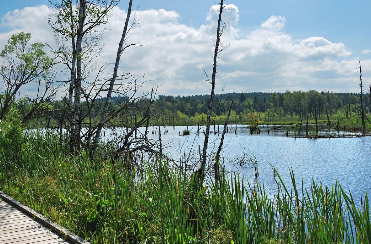 Schwenninger Moos: прогулки на природе