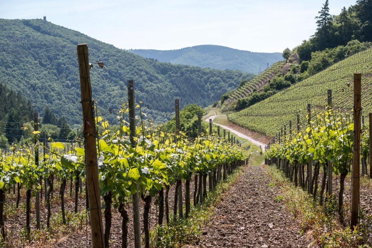 Германский винный путь: путешествие по югу страны